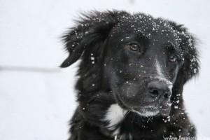 Így téliesítsd a kutyaházat