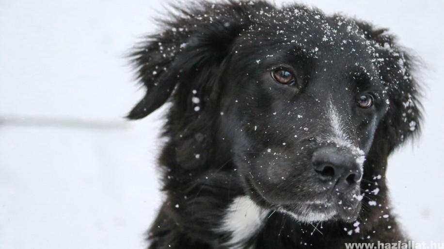 Kutyaház téliesítése: szigeteld, béleld, védd a széltől!