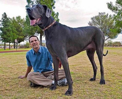 George a világ legnagyobb kutyája