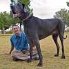 Meghalt a világ legnagyobb kutyája