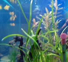 toma-istvan-akvarista