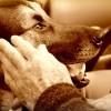 Menhelyi állatokat lehet befogadni az ünnepekre