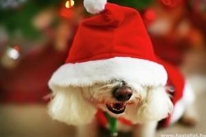 Kutyakarácsony - állatok megmentésében kérjük a segítséget