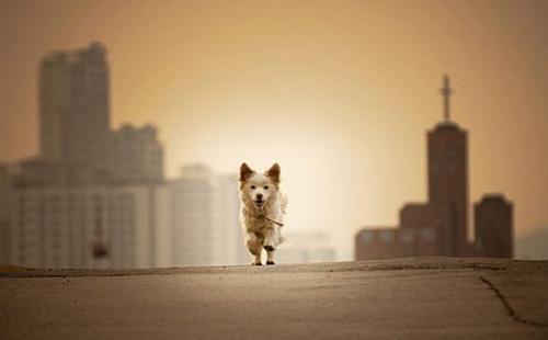 elhagyott_kutya