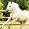 Mennyit bír a ló?