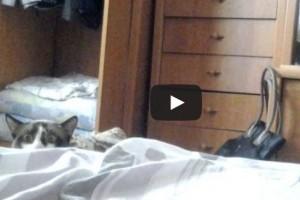 Dobj el mindent, itt az új kedvenc macskás videónk!