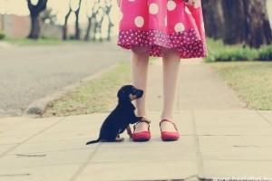 A kutyák szociális viselkedésének genetikai háttere