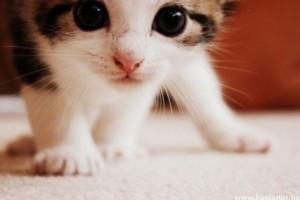 A legcukibb macskás videó a világon!