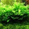 Miért károsodik a növény az akváriumban?