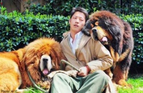 Tizenkét millió jüanért (431,6 millió forint) kelt el a világ egyik legdrágább kutyája Kínban.