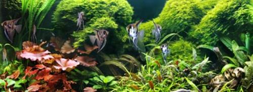 Az akváriumban a bűzös szag a szerves anyagok bomlásának jele