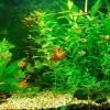 Miért büdös az akvárium vize?