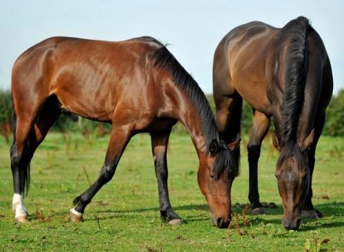 a legeltetés rendkívül fontos a lovak számára