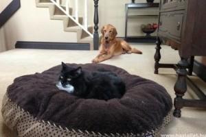 A cicók mindig lenyúlják a kutyák fekhelyét...