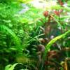 Kedvelt és gyakori vízinövények