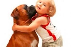 Házhoz viszik az örökbe fogadott kutyákat