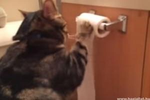Willie a vécépapír-mágus cicó