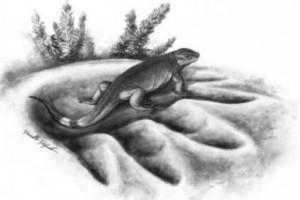 A növényevő állatok ősét fedezték fel kanadai tudósok