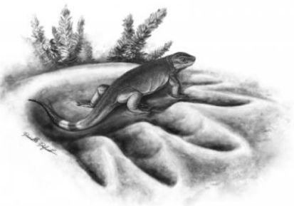 növényevő állatok ősét fedezték fel