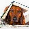 Kutya bácsi olvasni tanít