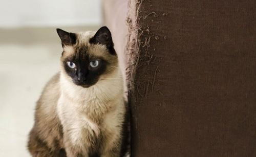 macskakaparas4