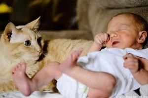 Amikor a cicó először találkozik az újszülöttel!
