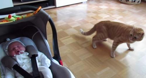 macska_ujszulott2