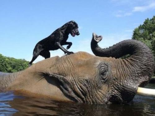 Buborék az elefánt és Bella a kutya barátsága