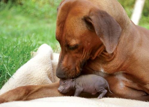 Malacot fogadott örökbe a kutyamama