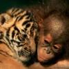 Hihetetlen állatbarátságok! Cuki képek