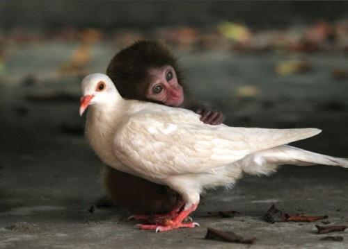 Árva majmocska és galamb barátja