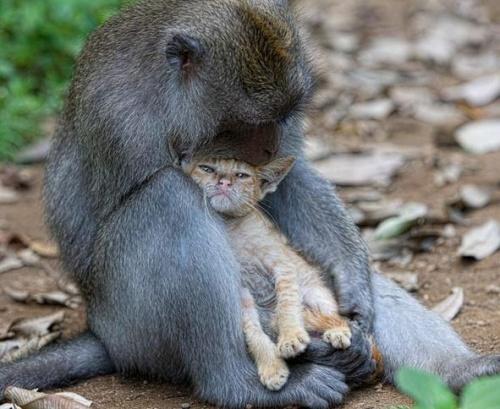 Cicát fogadott örökbe egy makákó