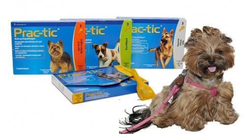 Havonta egy spot-on-os csepegtetéssel megvédhetjük kutyánkat a kullancsoktól!
