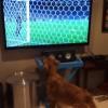 Senki nem imádja jobban a foci VB-t, mint ez a kutya!