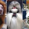 A 9 legidiótább állati szőrvágás