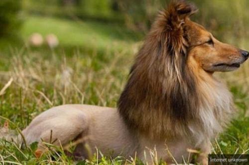 Emlékeiben még kutyaszerű oroszlán :)