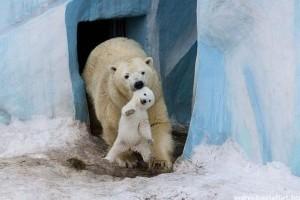 A 25 legcukibb állatkölykös kép
