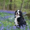 Itt a tavasz! - állatok tavaszi immunerősítése