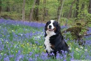 Itt a tavasz! Fontos az állatok tavaszi immunerősítése