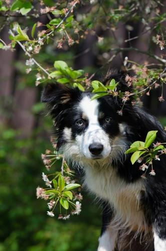 tavasz kutya