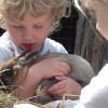 Nyuszi-simogató várja a gyerekeket az Állatkertben