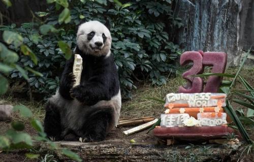 meghalt_panda