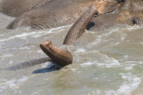 elefánt fürdik