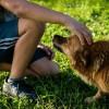 A kutyák nem szeretik azokat, akik utálatosak gazdájukkal