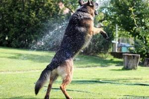 A tipikus nyári kutya-macska betegségek megelőzhetőek