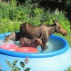 Állati hőség - vicces videók és fotók