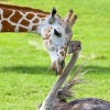 15 különleges állatbarátság, amely megmelengeti a szíved