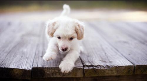 Kiskutya tartása, gondozása