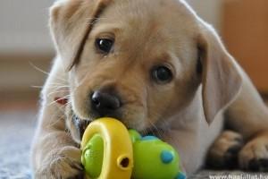 Gyakorlati tanácsok kezdő kutyatartóknak