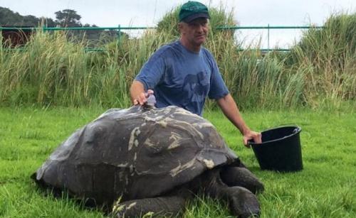 Dr. Joe Hollins, állatorvos és Jonathan (JOEHOLLINS/BNPS)